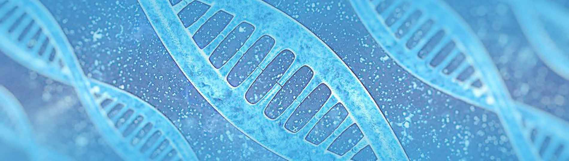 2020年最新结核分枝杆菌基因敲除菌株